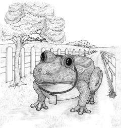 Hand-drawn illustration for The Watchfrog Story