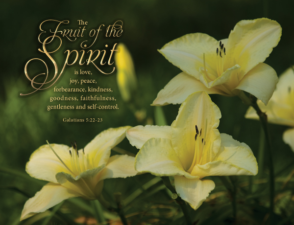 Daylilies Floral Photography